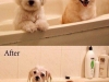 funny_dogs_001