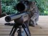 cat_sniper_002