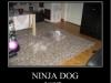 ninja_dog_011