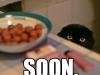soon_cat_016