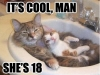 cats_021