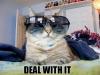 cool_cat_022
