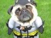 dog_batman_030