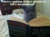 cat_031