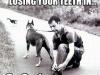 dog_leash_035