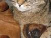 cat_dog_054