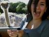 ostrich_062