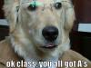 dog_088